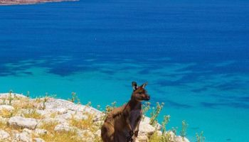 region-kangaroo-island